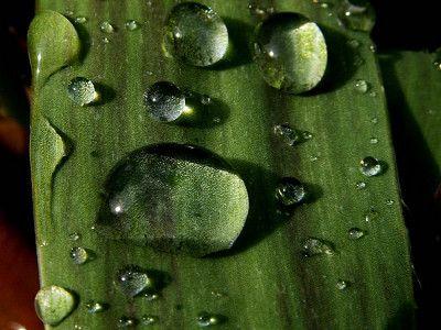 gotas de agua en una hoja