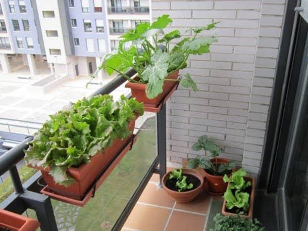 huerto urbano en balcon