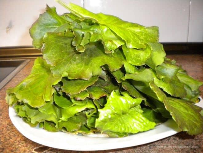 hojas de lechuga recien cortadas