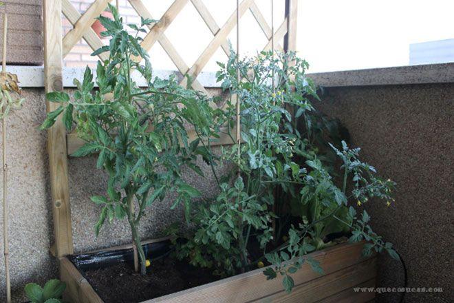 Como sacar las tomateras de la maceta casa dise o casa - La casa de la maceta ...