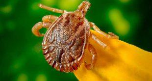 Cómo eliminar insectos de nuestro huerto urbano