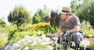 8 Consejos al comprar flores online